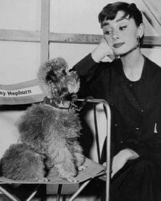 Audrey Hepburn Poodle Dog